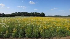 Campo de flores cerca de La Bohalle