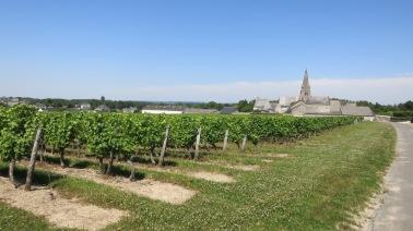 Entre los viñedos
