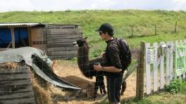 Remi junto a una alpaca