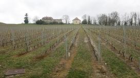Uno de los muchos viñedos que hemos visto