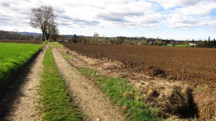 Uno de los caminos de la ruta
