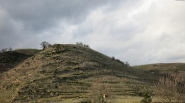 Una de las laderas del Ródano cubierta de viñedos