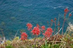 Flores y mar en Corniglia