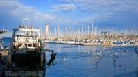 Gaviotas buscando los desechos de un pesquero en el puerto de Sète