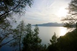 Estampa mediterránea con pinos