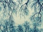 Detalle del ramaje de los árboles