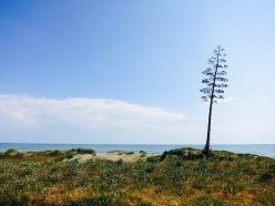 Playa con árbol de Pita