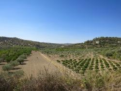 Campos de olivos y cítricos