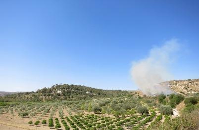 Campo de cítricos y olivos con el incendio de fondo