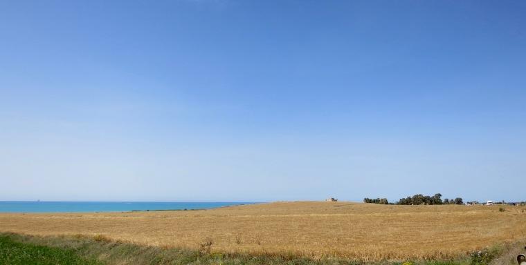 Cereal junto al mar