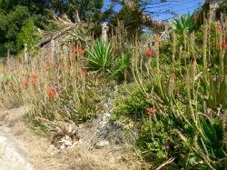Plantas del camino