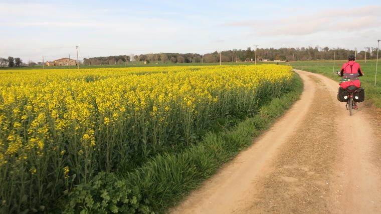 Por aquí hasta los campos se tiñen de amarillo